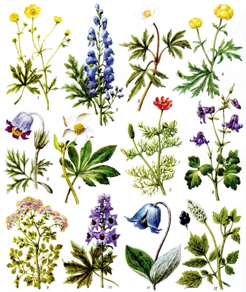 цветы и травы картинки с названиями положению оттенка