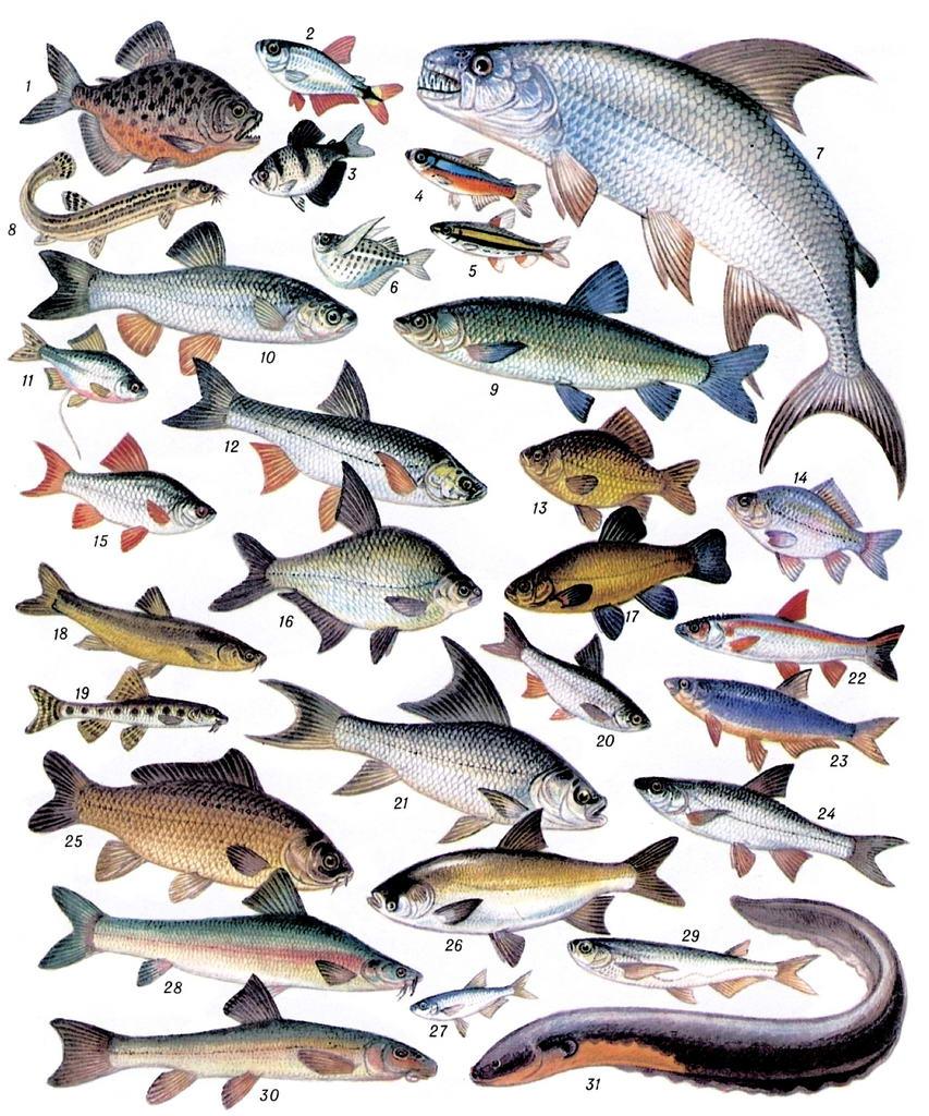 картинки только пресноводных рыб поручил усилить работу